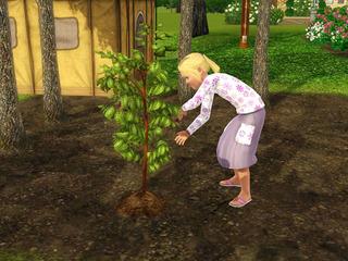 gardening_chd02.jpg